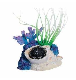 Aquaria (D) Sea Flower Triton Shell Small Urchin Black