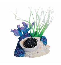 Aquaria (W) Sea Flower Triton Shell Small Urchin Black