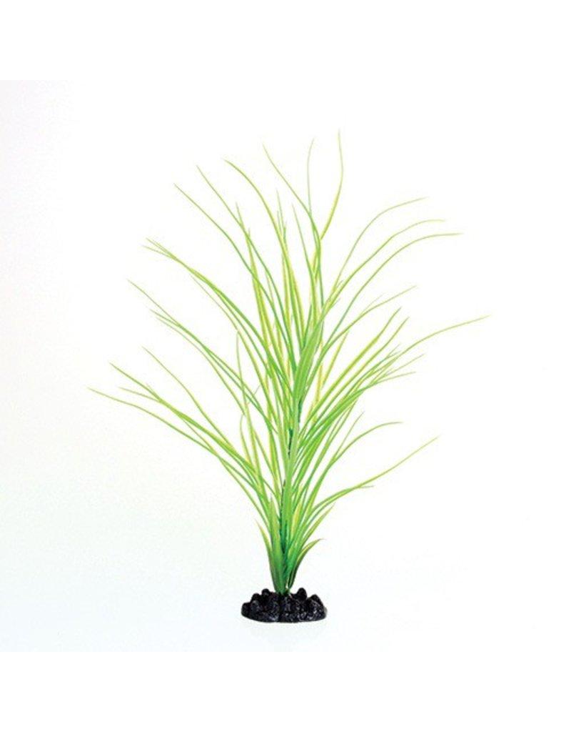 Aquaria UT PP GREEN HAIRGRASS 16IN
