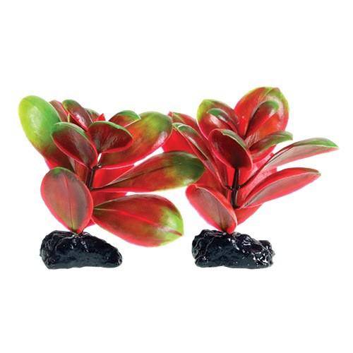 Aquaria (D) UT PP RED/GREEN BACOPA 2 POD 3IN