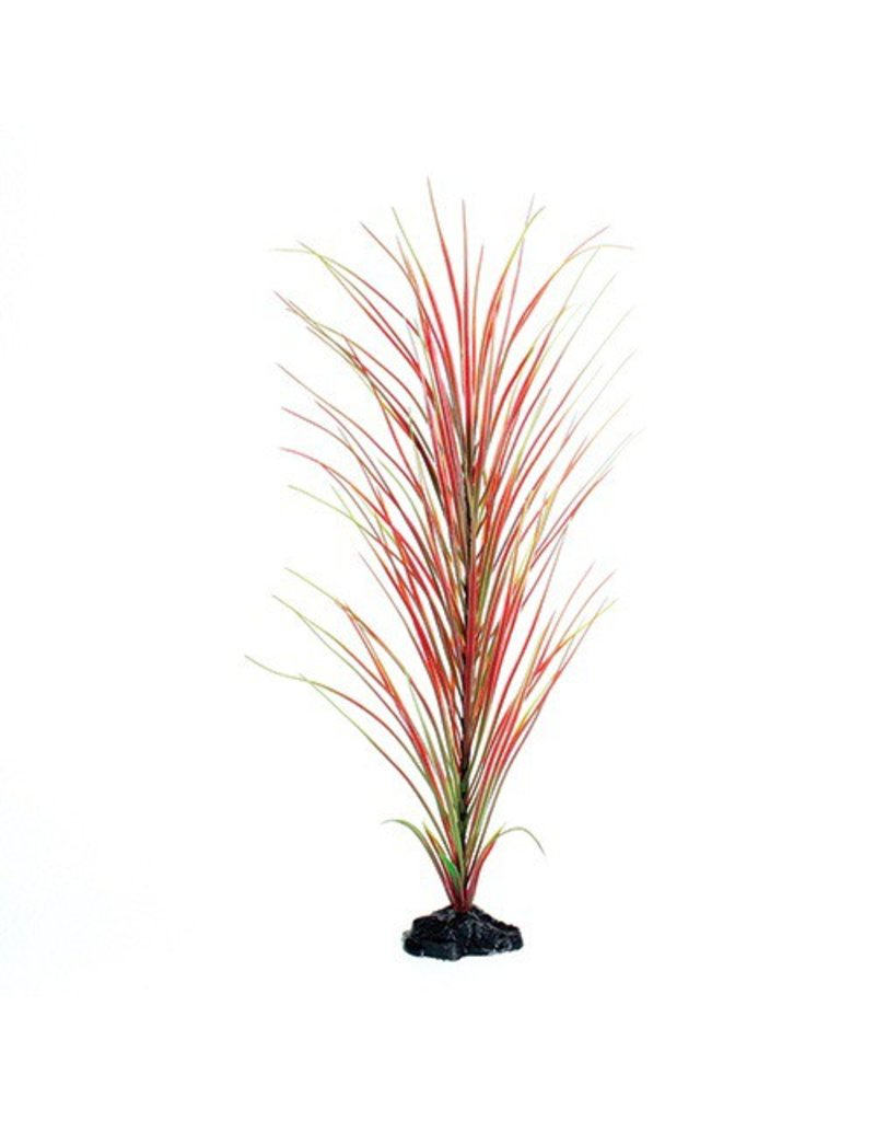 Aquaria UT PP RED/GREEN HAIRGRASS 20IN