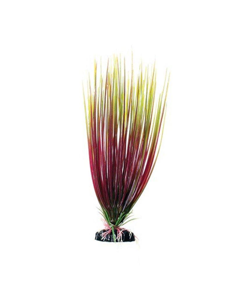 Aquaria UT PP RED/GREEN HAIRGRASS 12IN