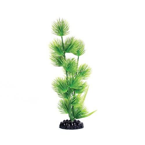 Aquaria (D) UT PP GREEN CONIFER 12IN