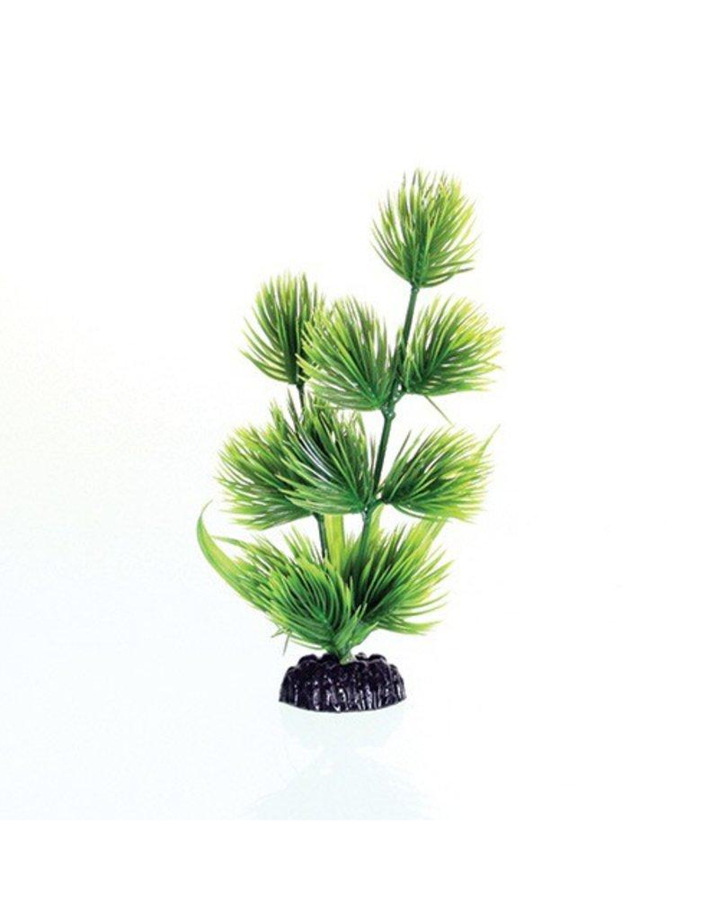 Aquaria (W) UT PP GREEN CONIFER 8IN