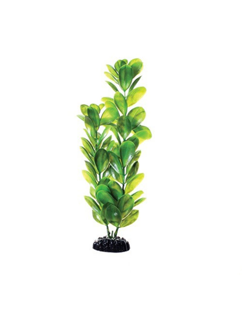 Aquaria UT PP GREEN BACOPA 12IN