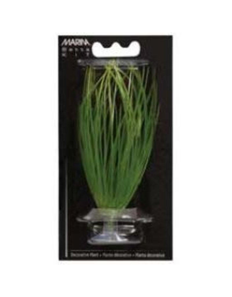 Aquaria MA Hairgrass 5in W/Suction Cup-V