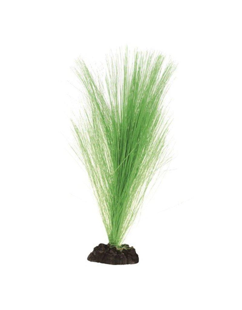 Aquaria UT HAIRGRASS 8 IN GREEN
