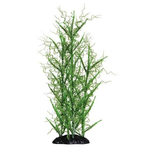 Aquaria (D) UT FLOWERING MEDUSA XL