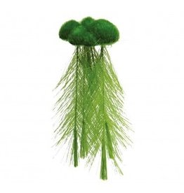 Aquaria (D) UT FLOATING MOSS W/FEATHER ROOT(MD)