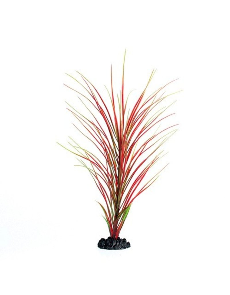 Aquaria UT PP RED/GREEN HAIRGRASS 16IN