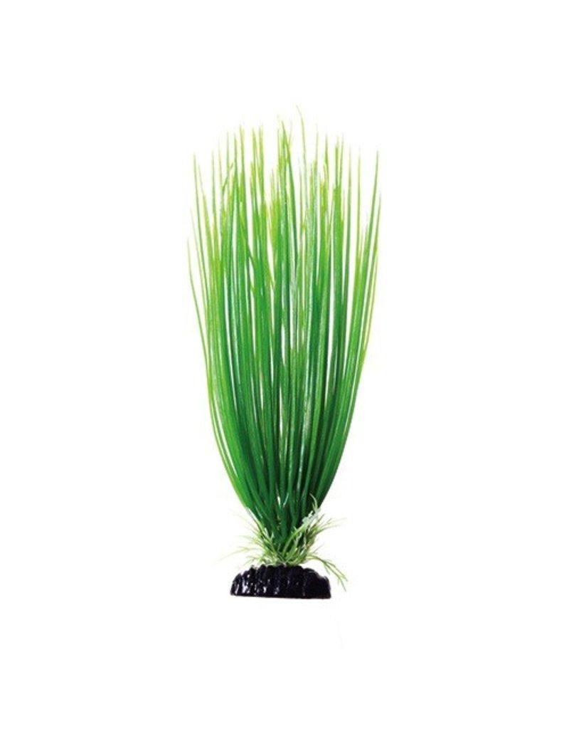 Aquaria UT PP GREEN HAIRGRASS 12IN