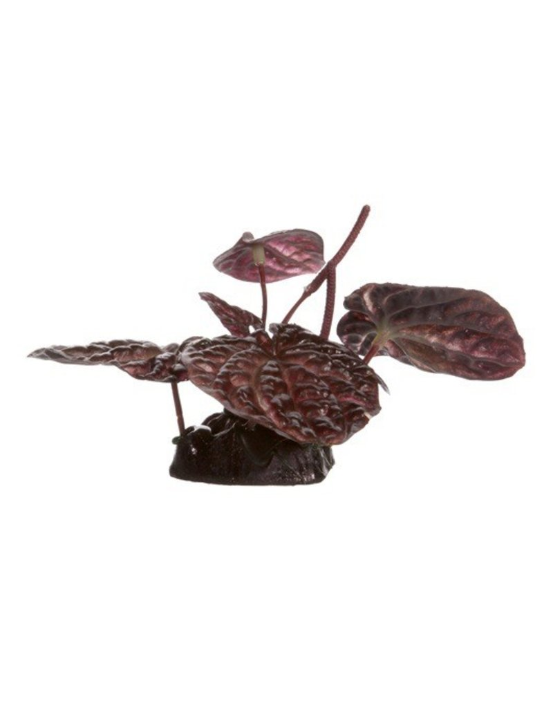 Aquaria (D) FL Red Lotus, Small, 10cm(4in) w/Base