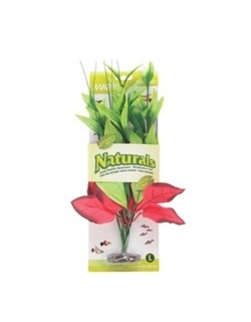Aquaria (W) MA Ntl Red&Grn Pickerel Silk Plant,Lge