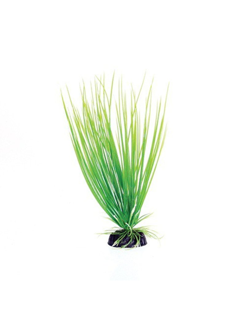 Aquaria (W) UT PP GREEN HAIRGRASS 8IN