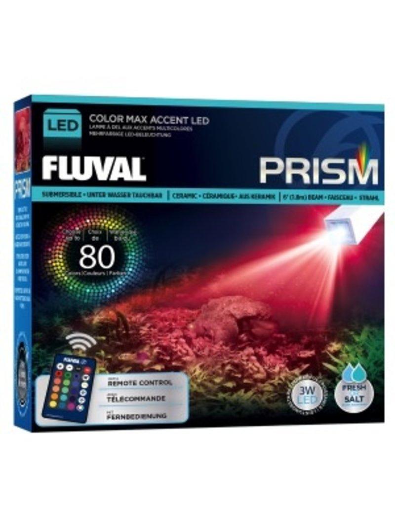 Aquaria (D) PRISM<br /> COLOR MAX ACCENT LED