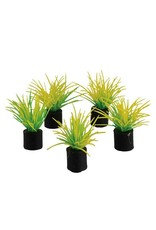 "Aquaria Mini Plant - Spring Grass - 1.25"" - 5 pk"