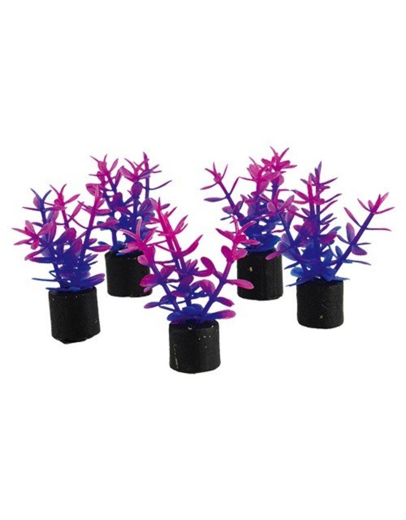 """Aquaria Mini Plant - Violet - 1.5"""" - 5 pk"""