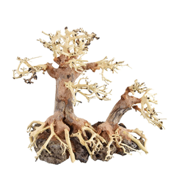 Aquaria (W) UT Bonsai Wood With Rock - Medium
