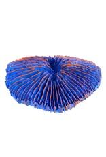 Aquaria Plate Coral - Blue - Mini