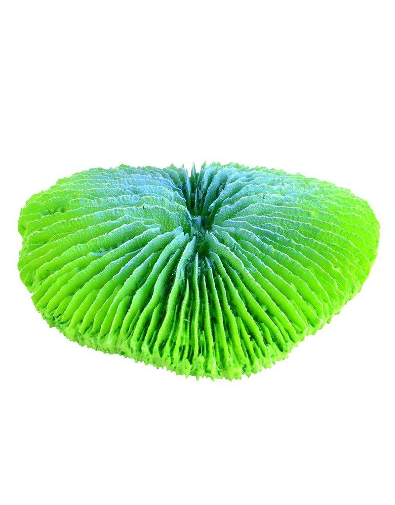 Aquaria (D) Plate Coral - Green - Mini