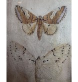 Antiqued Butterfly Wall Art