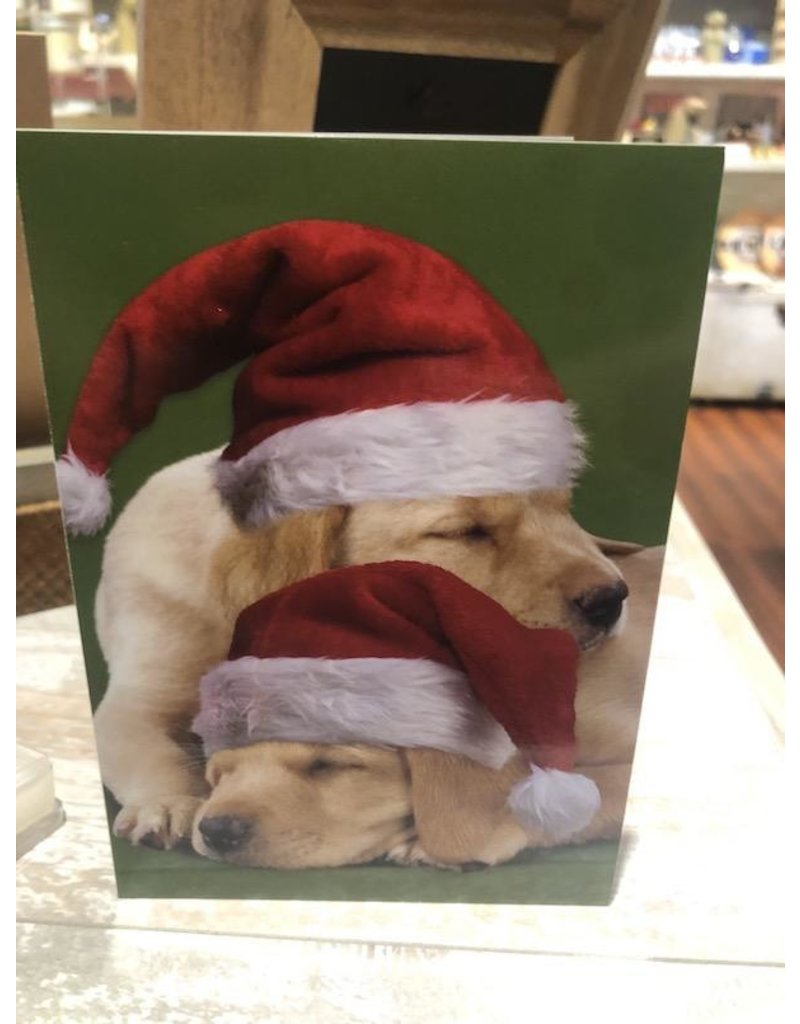 Leanin Tree Xmas Card: Santa Hat Sleeping Dogs