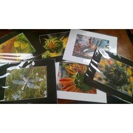 Lori Shepard Photography Nature Photography