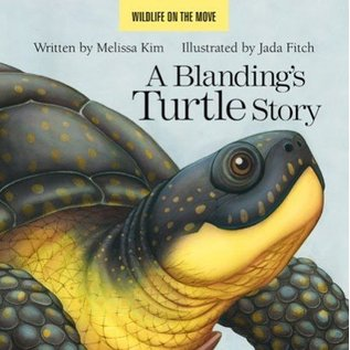 Islandport Press A Blanding's Turtle Story by Melissa Kim