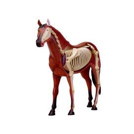 4D Master 4D Master 4D Vision Horse Anatomy Model