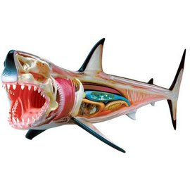 4D Master 4D Master 4D Vision Great White Shark Anatomy Model