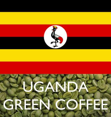 BUENAVITA GREEN BEANS - UGANDA RFA UTZ BUGISU 15+ ORGANIC  (WASHED) 1 LB