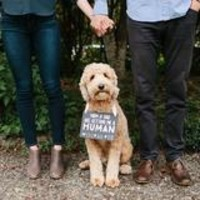 PEARHEAD PET'S BABY ANNOUNCEMENT CHALKBOARD
