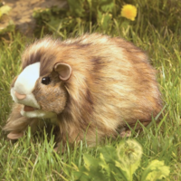 FOLKMANIS GUINEA PIG PUPPET