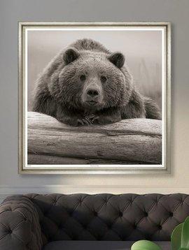 Trowbridge Portrait of A Bear Photograph