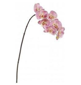 Winward Flowers Flowers 95162.HP Orchid Phalaenopsis