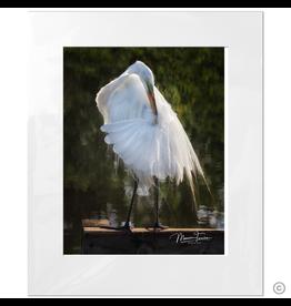 Maureen Terrien Photography Art Print Pier Egret Preening B 8x10 - 11x14 Matted