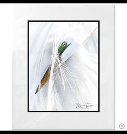 Maureen Terrien Photography Art Print Pier Egret Preening D 8x10 - 11x14 Matted