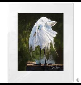 Maureen Terrien Photography Art Print Egret Preening 11x14 - 16x20 Matted