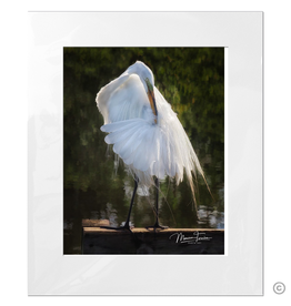 Maureen Terrien Photography Art Print Egret Preening B 11x14 - 16x20 Matted