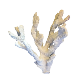 A.A.F. Decorative Coral Cluster 14x9x8 inch Coastal Home Decor