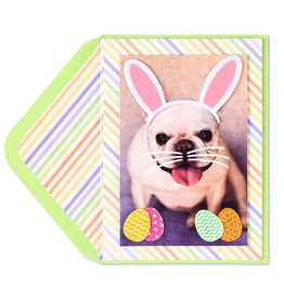 PAPYRUS® Easter Card Easter Dog Dressed Like Bunny Card by Papyrus