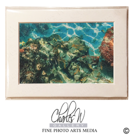 Charles W Frameable Photo Art Cards by Charles W 020 Coral Reef Florida Keyes