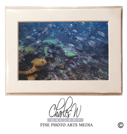 Charles W Frameable Photo Art Cards by Charles W 019 Reef Fish Lauderdale By The Sea
