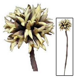 Kalalou Flowers Florals Exotic Floral Botanical Stem 27