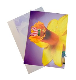 Avanti Easter Cards Bunny Frog in Spring Yellow Flower