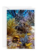 By The Seas-N Greetings Blank Note Card - Cash - Gift Card Holder - Reef II