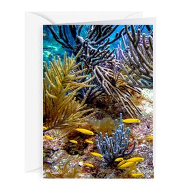 By The Seas-N Greetings Blank Note Card - Cash - Gift Card Holder - Reef II