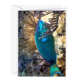 By The Seas-N Greetings Blank Note Card - Cash - Gift Card Holder - Parrot Fish