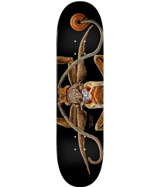 "POWELL PERALTA 8.25"" Biss Marion Moth Deck"