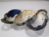 Rare Earth Gallery Server, Three Sea Shells